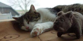 Katze Xena, Kevin die Stoffratte
